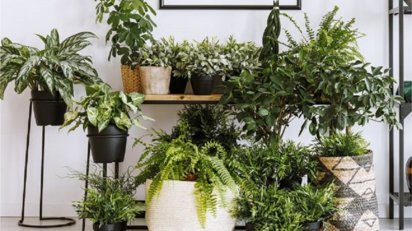 Decorate your indoor garden with plants that absorb moisture
