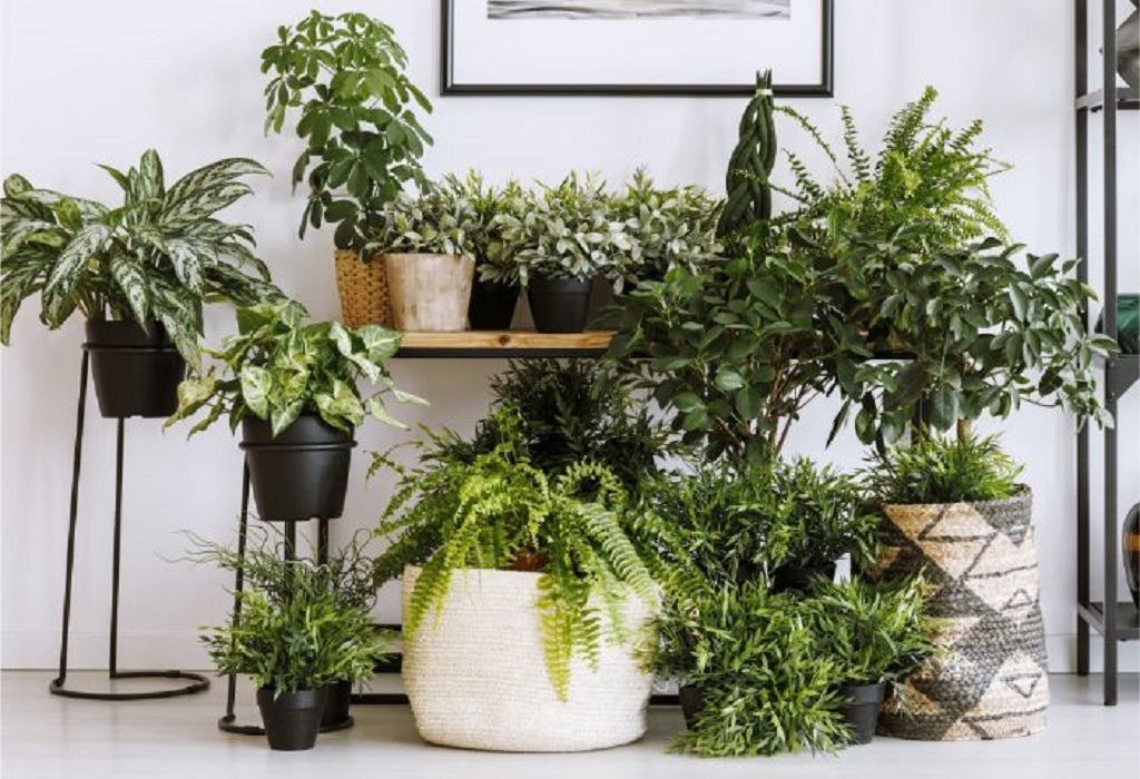 Decorate your indoor garden