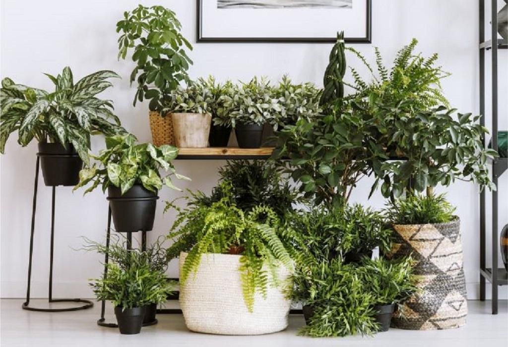 Decorate your indoor garden