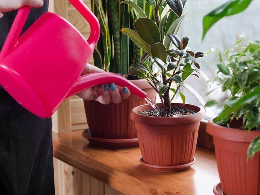 take care of plants at home